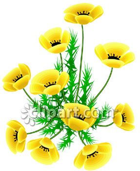 Yellow Poppy Plant