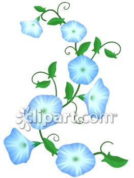 Blue Morning Glory Vine