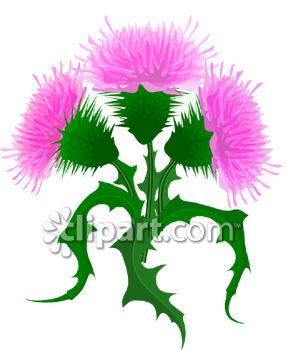 Pink Thistle Flowers