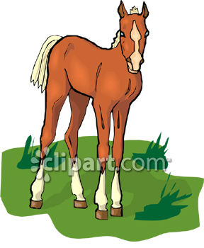 Chestnut Colored Foal