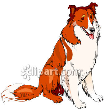 Dog Breed-Collie