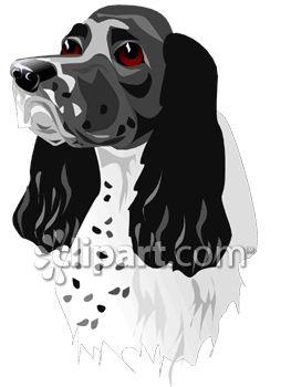 Dog Breed-English Springer Spaniel