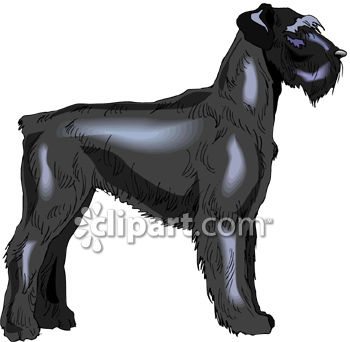 Dog Breed-Black Airedale