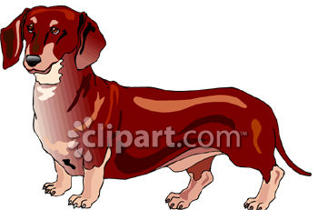 Dog Breed-Daschund