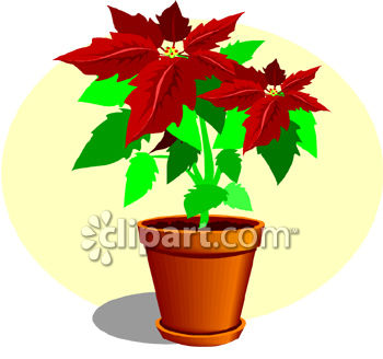poinsettia clipart mode