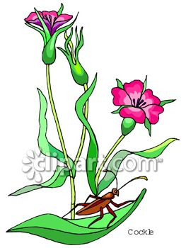 Carnation Flowers With A Grasshopper On The Leaves
