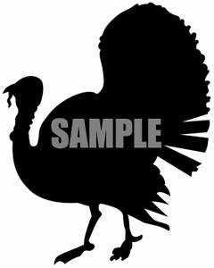 Black and White Turkey