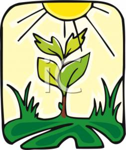 clipart of photosynthesis rh clipartguide com photosynthesis clipart free