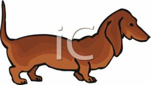 Dachshund Clipart Picture
