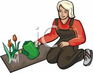Woman Watering Her Tulips