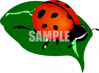 Ladybug on a Leaf Clip Art
