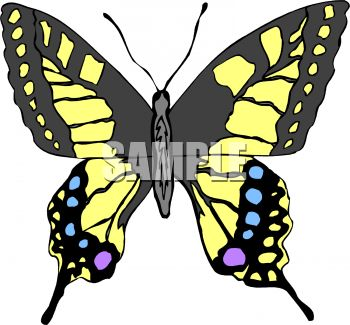 Tiger Swallowtail Butterfly Clip Art