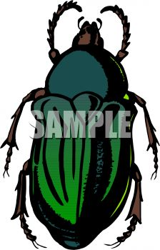 Dark Green Flower Beetle Clipart