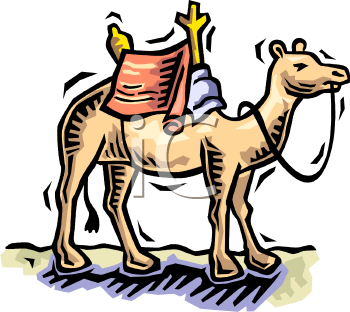 Camel with a Saddle