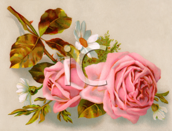 Pink Roses and Daisies Victorian Floral Clip Art