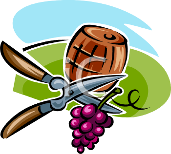 Vineyard Barrel and Snipped Grapes