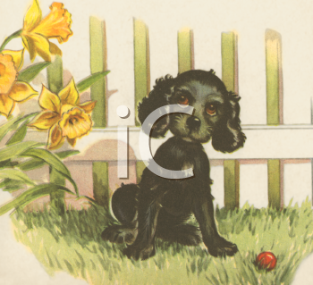 Cocker Spaniel Pup with Daffodils in a Springtime Yard