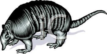 Realistic Styled Armadillo