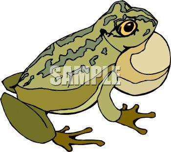 bullfrog with filled airsac royalty free clipart picture rh clipartguide com  american bullfrog clipart
