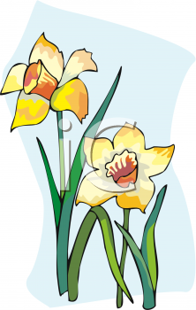 A Pair Of Daffodils
