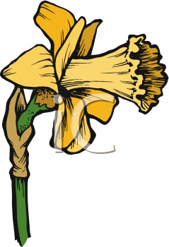 A Detailed Daffodil