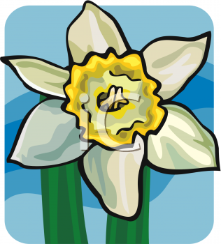 A Daffodil Bloom