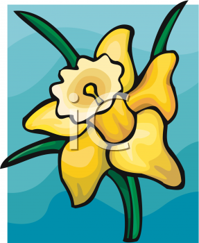 A Daffodil In Bloom - Royalty Free Clip Art Picture
