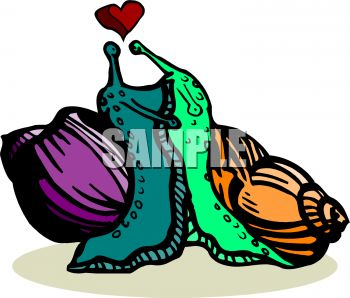 A Pair of Snails In Love