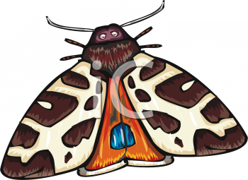 A Colorful Moth
