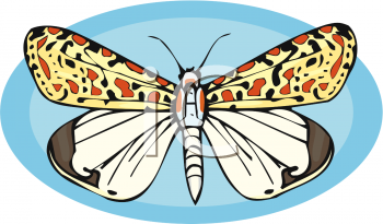 A Butterfly With Patterned Wings