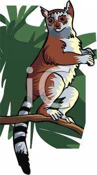 A Ring Tailed Lemur Standing On A Branch