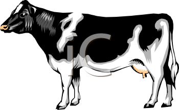 Realistic Black and White Dairy Cow