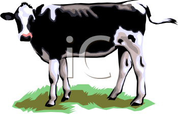 Jersey Type Diary  Cow