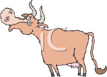 Cow With Horns