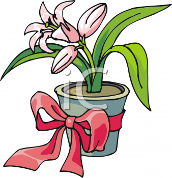 Potted Easter Lily