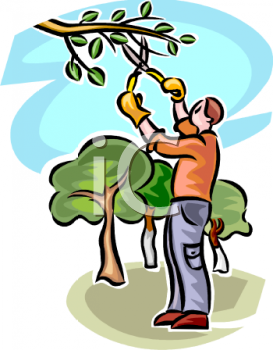Man Pruning a Branch on a Tree