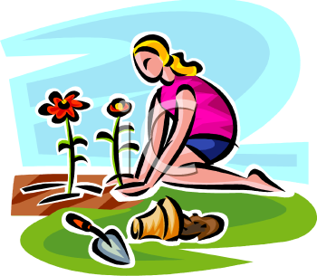 Young Woman Planting Flowers in a Garden - Royalty Free Clipart Image