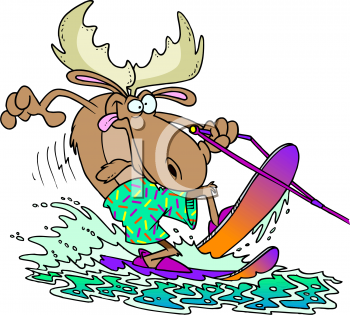 A Moose Water Skiing