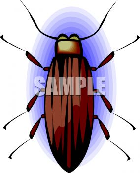 Common Brown Beetle