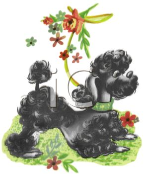 Vintage Cartoon of a Black Poodle