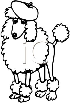 Black and White Drawing of a Poodle Wearing a Baret