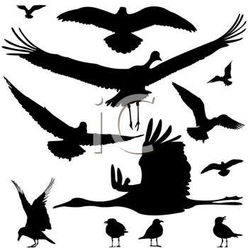 Silhouette of Different Kinds of Water Birds
