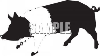 Silhouette of a Black and White Pig