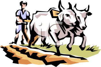 farmer leading a team of oxen royalty free clipart image rh clipartguide com Musk Ox Clip Art oxen pulling wagon clipart