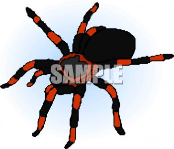 red and black tarantula royalty free clip art image rh clipartguide com tarantula clipart tarantula spider clipart