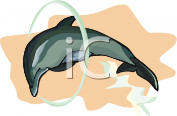 Trained Dolphin Leaping Through a Hoop
