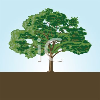 Large Shady Tree in Soil Logo Element