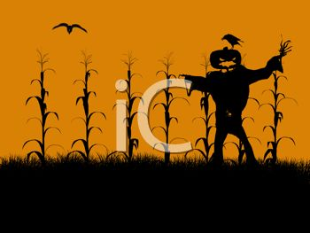 Halloween Background of a Cornfield with a Scarecrow - Royalty ...