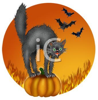 Hissing Black Cat on Pumkin with Vampire Bats on Halloween