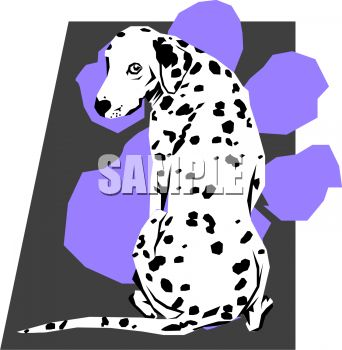 Dalmatian Breed of Dog